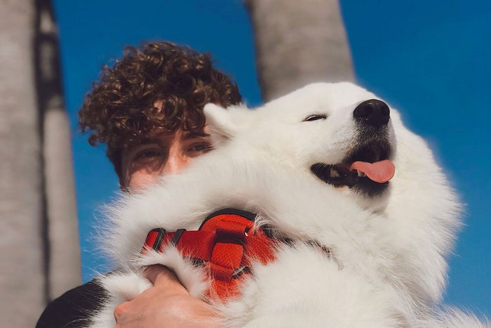 The Creator Of Weratedogs Makes Five Figures A Month By Posting Cute Canines Online Heres How
