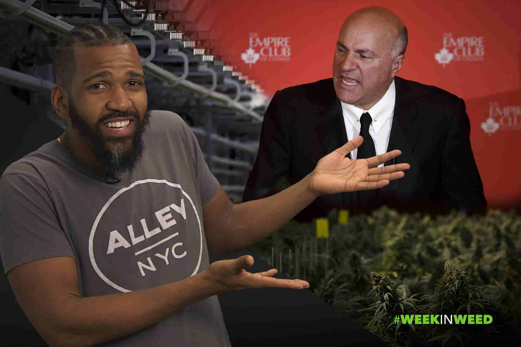 This Week in Weed: Mr. Wonderful Passes on Grass!