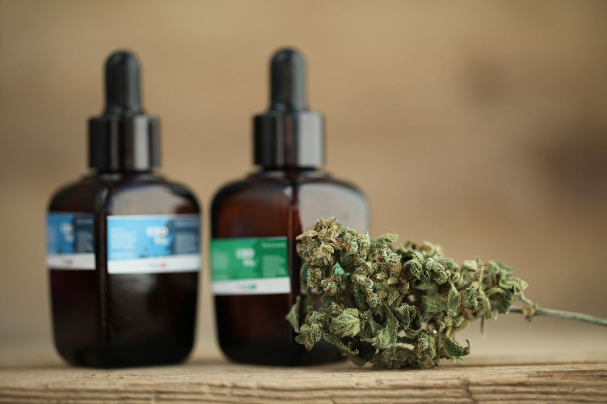How to become a CBD wholesale distributor?