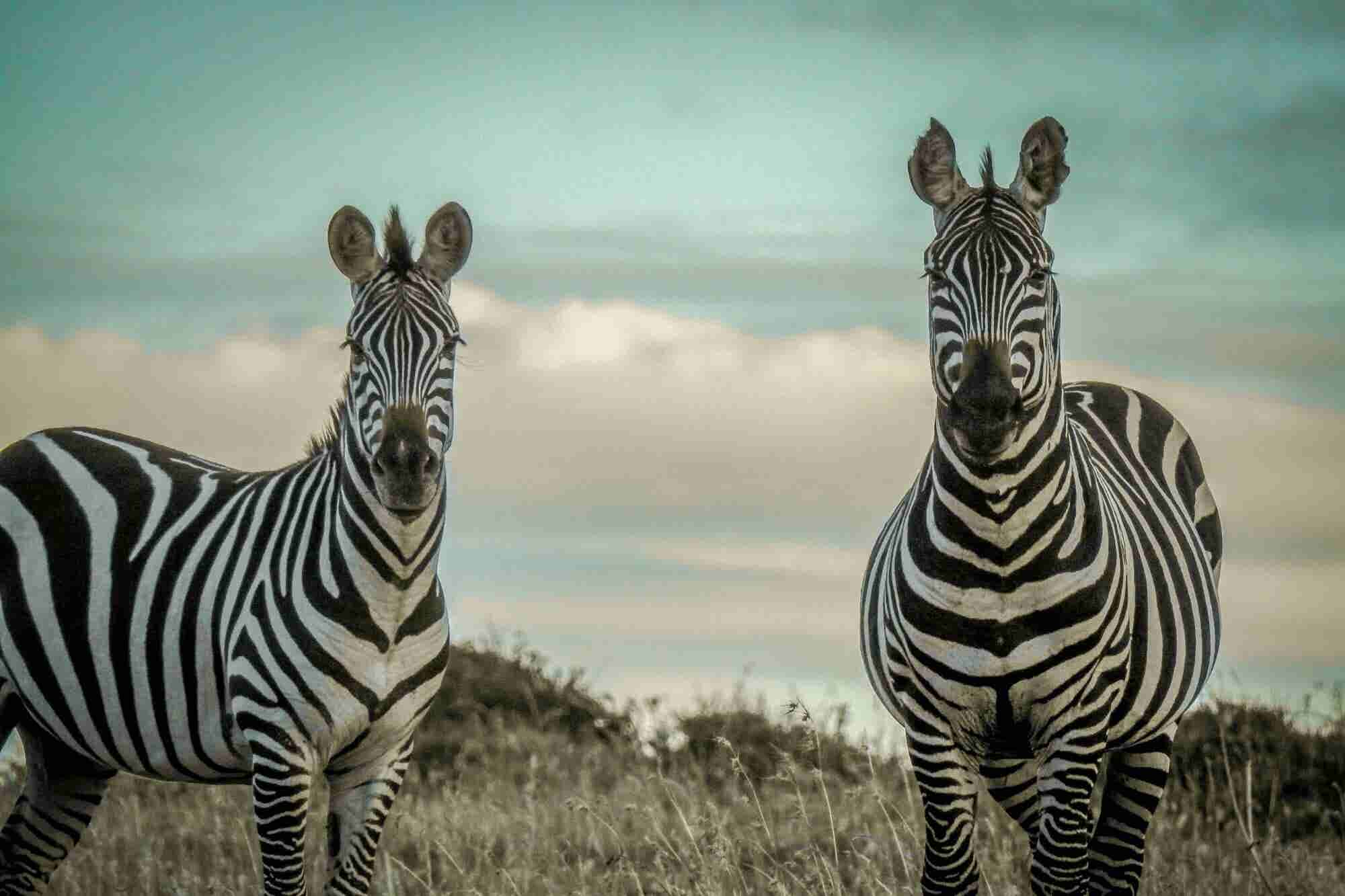 Forget Unicorns. We Need More 'Zebra' Startups.