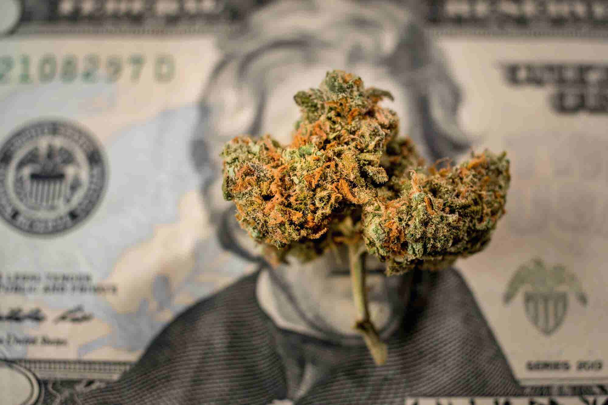 Silicon Valley VCs Were Eager to Hear About Our Cannabis Tech Firm but Reluctant to Invest