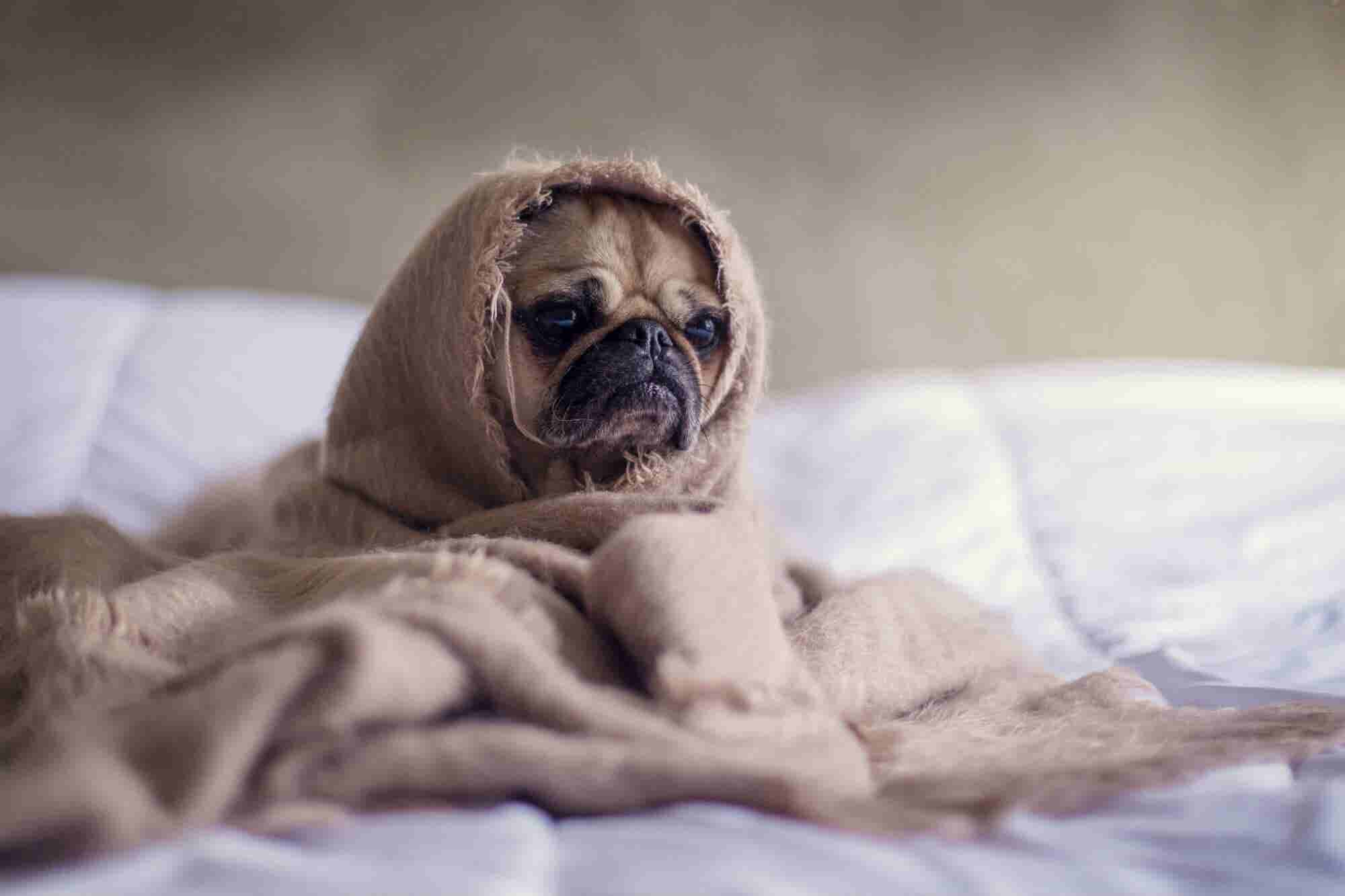 5 formas de ser productivo antes de pararte de tu cama (aunque no quie...