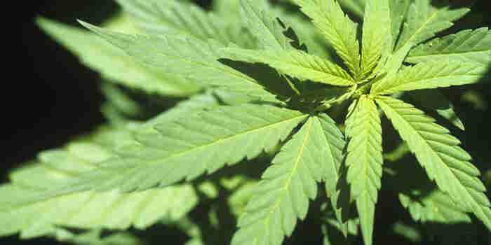 Hemp Clears Legislative Hurdle and Is Poised to Be Legalized
