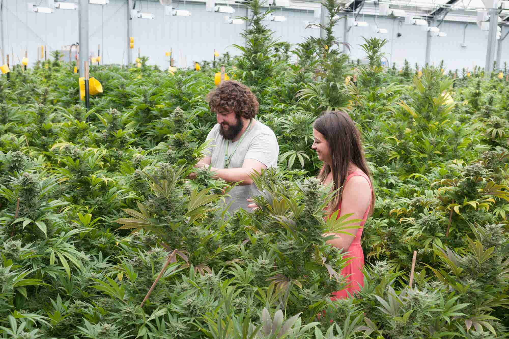8 Truly Unique Jobs in Cannabis