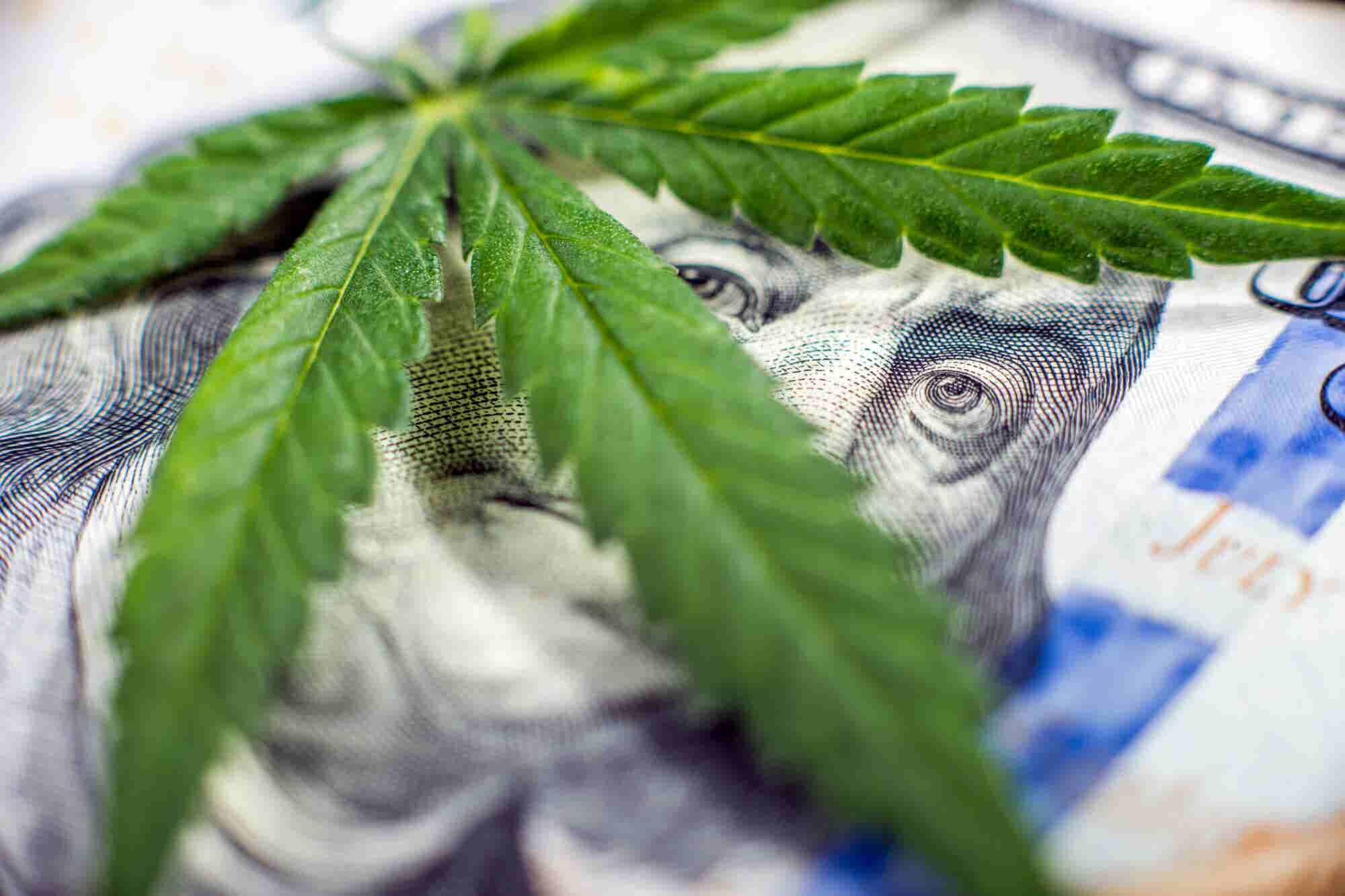 Big Business is Cashing In On the Cannabis-Fueled Green Rush