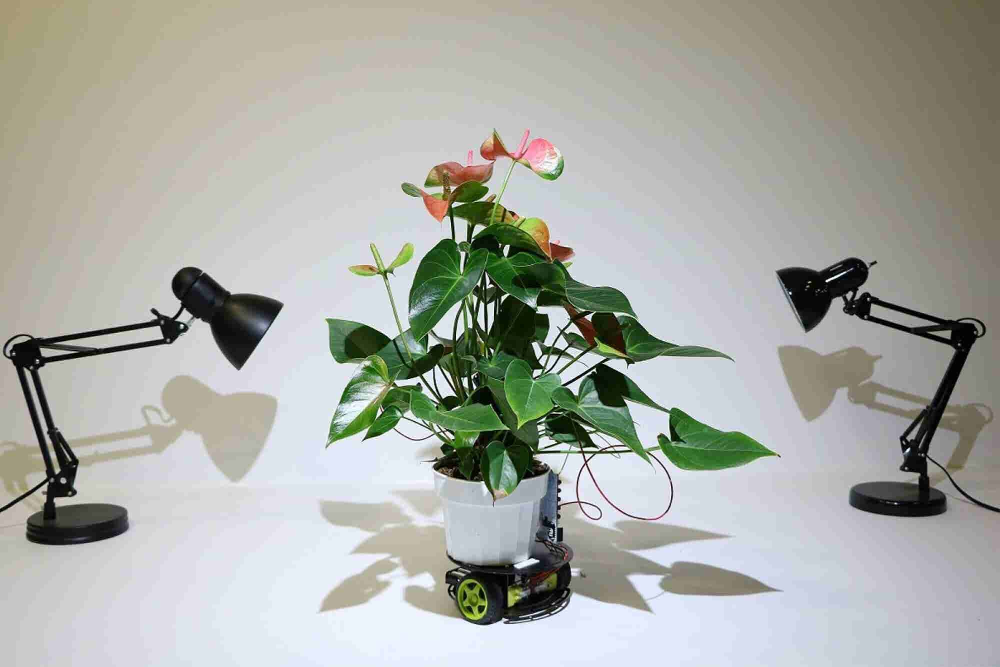 MIT Researchers Create a Robot Houseplant That Moves on Its Own