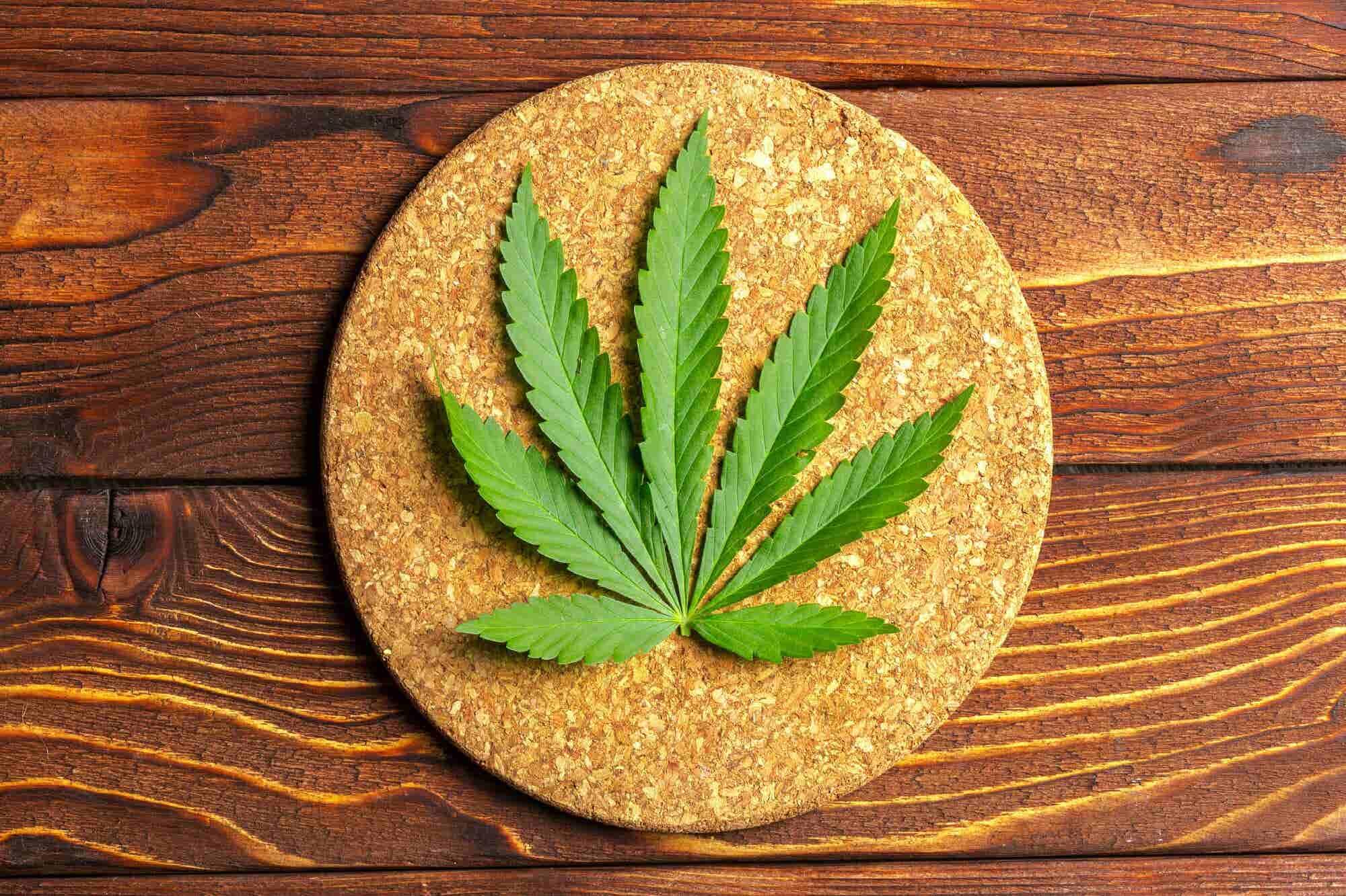 M茅xico podr铆a convertirse en el mayor productor de cannabidiol gracias a la creaci贸n de la C谩mara de la Industria del Cannabis