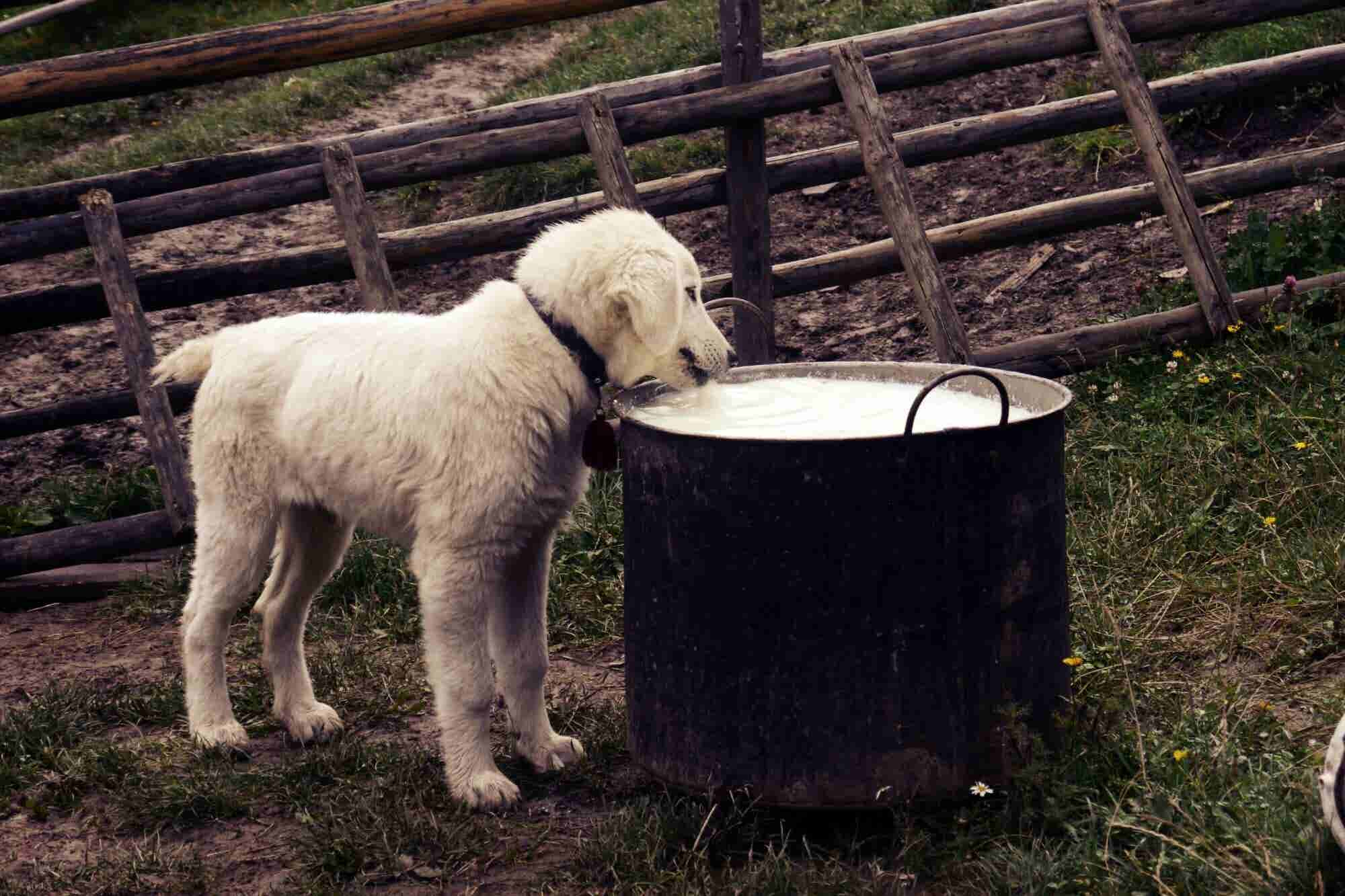 Things You Must Know About the Natural Pet Food Segment
