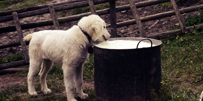 Natural Pet Food Segment: a Boon for the Well-Being of Modern-day Pets