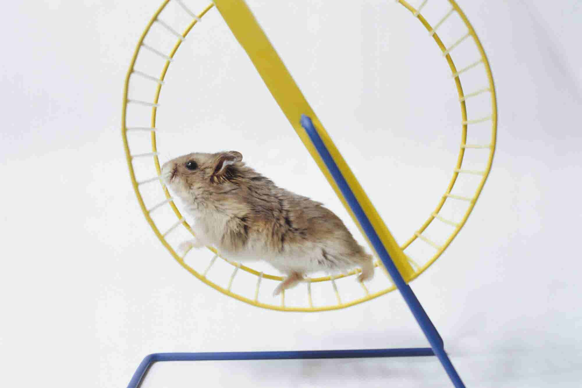 How To Build Business Momentum and Escape the '6-Figure Hamster Wheel'