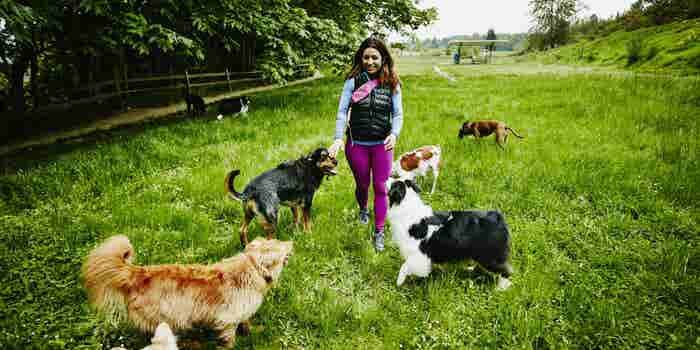 How Stylists, Dog Walkers and More Are Making Six Figures -- and What You Can Learn From Them