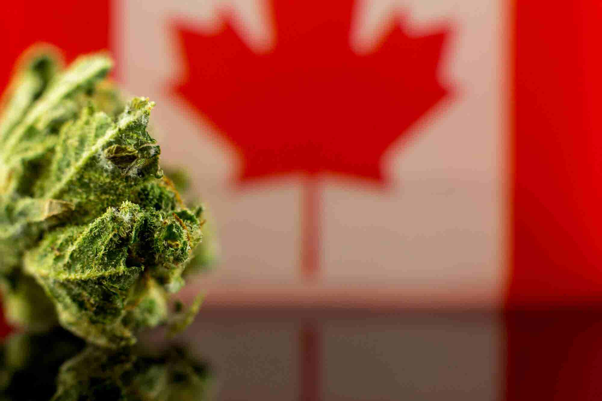 US Cannabis Leaders are Carefully Watching the Looming Canadian Wave