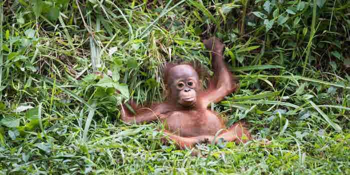 Boicotear a productos como Nutella podría provocar más deforestación