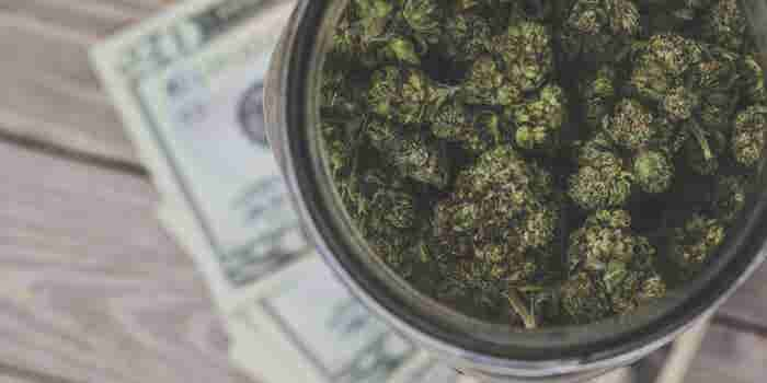 Maryland Marijuana Sales Double the Forecast