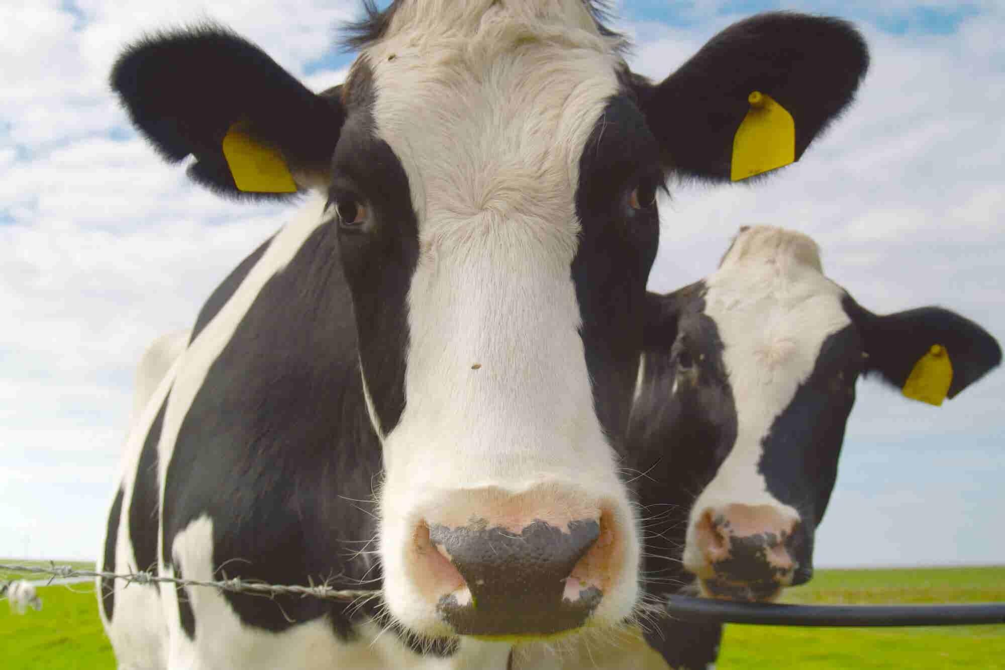 Con la pena veganos: Dejar de comer carne no va a salvar el planeta