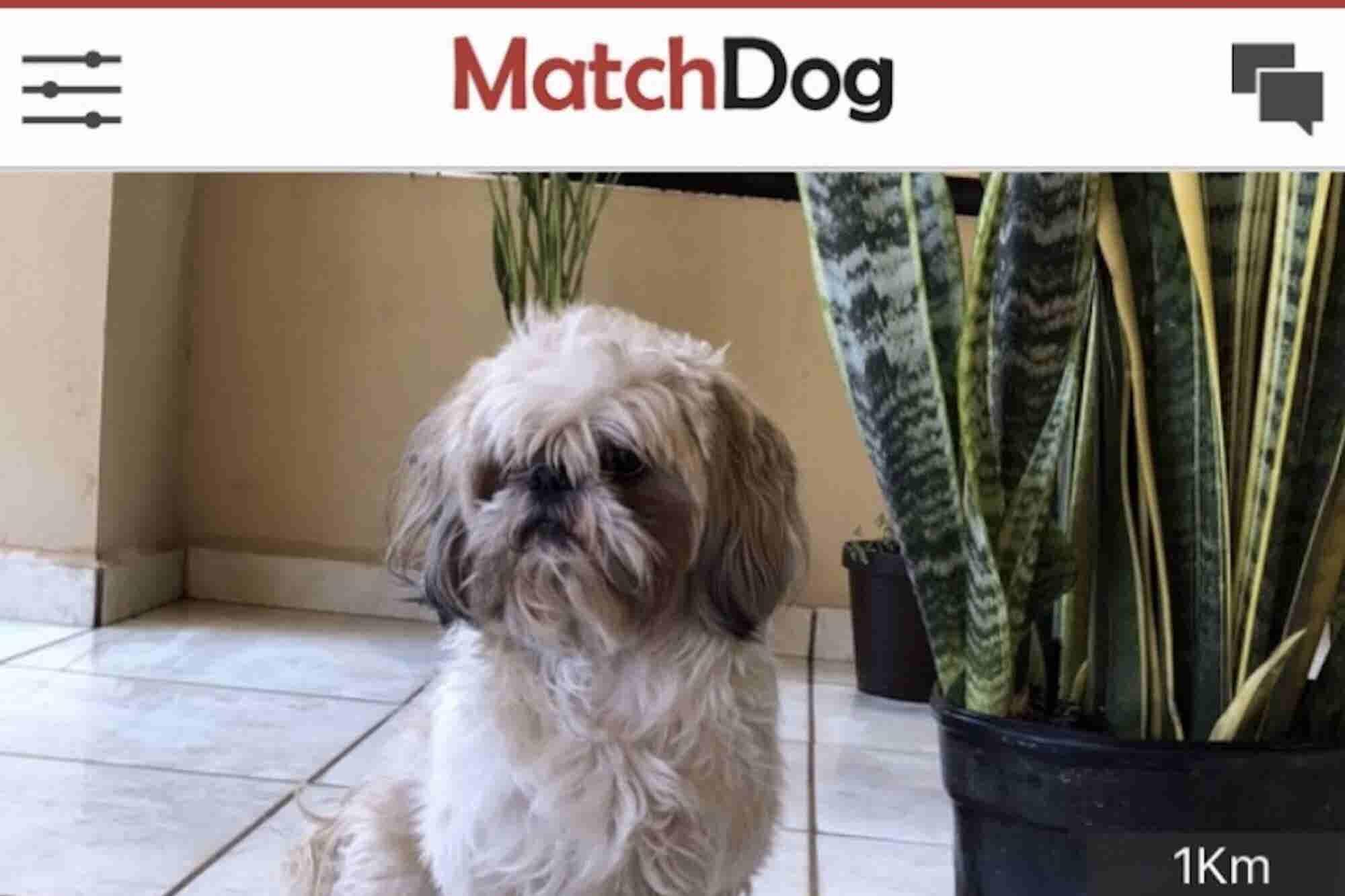 ¿Tu 'suave lomito' necesita un veterinario? Dos jóvenes mexicanos crearon la app que te conecta con todo lo que necesita tu mascota