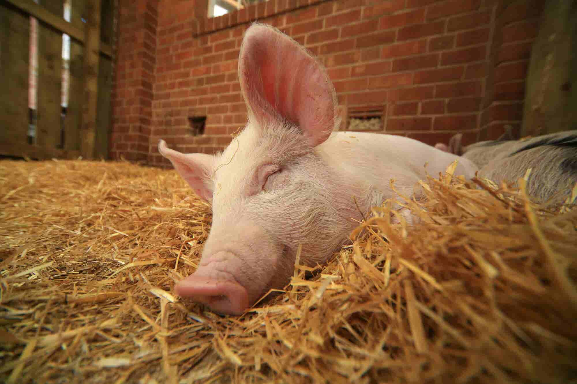 What Pig Poop Taught Me About Growing a 20-Year-Old Business
