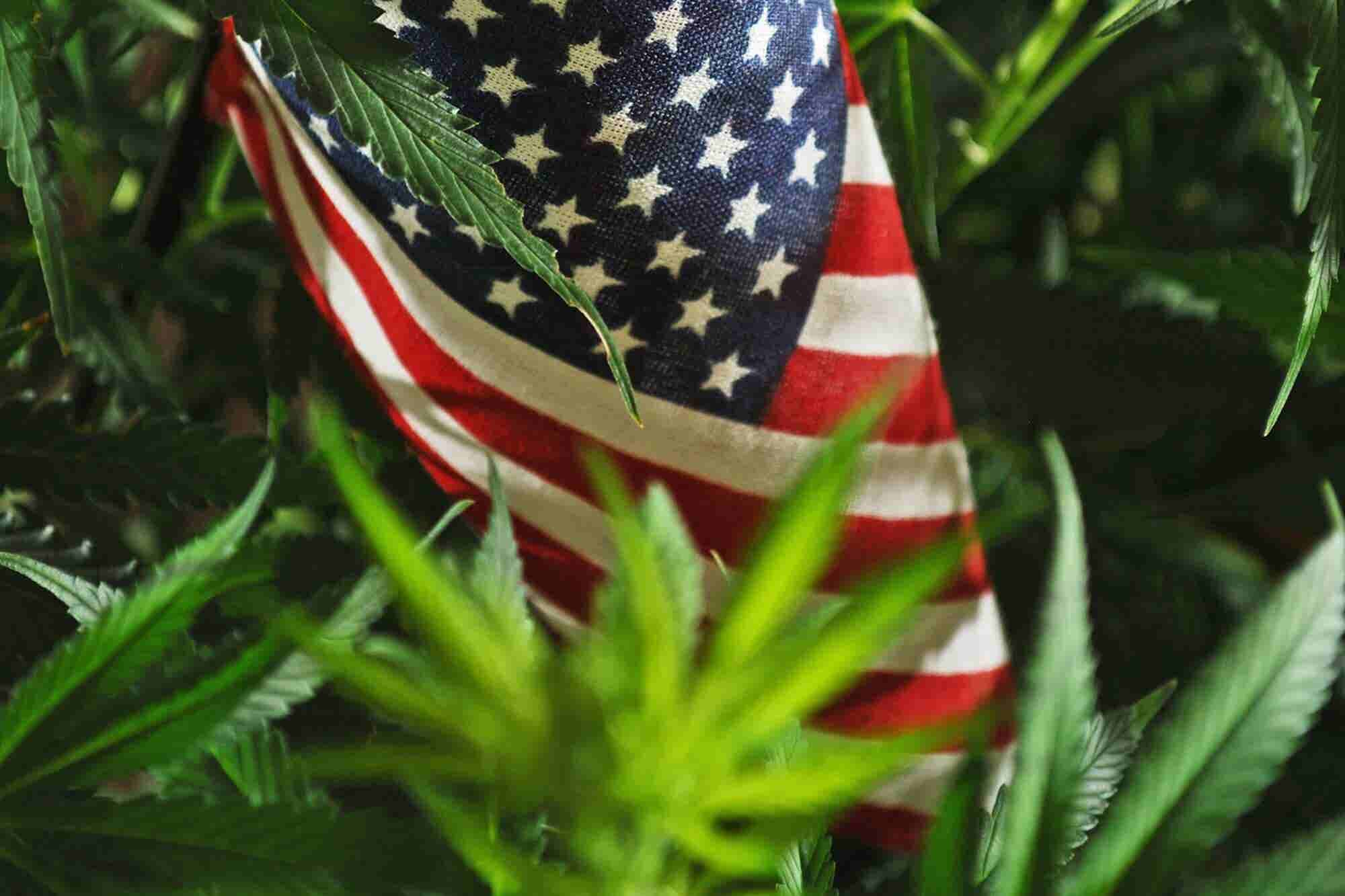 3 Compliance Considerations for Multi-State Cannabis Businesses