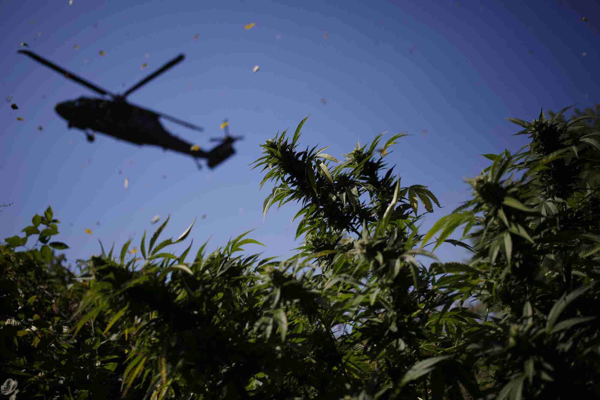 Who Will be the Winners and Losers When Federal Cannabis Prohibition E...