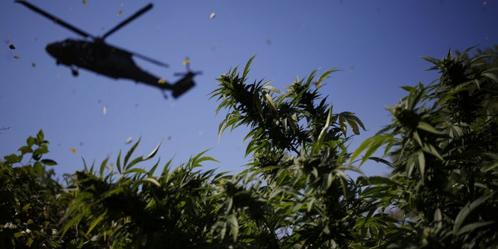 Qui seront les gagnants et les perdants à la fin de la prohibition fédérale du cannabis?