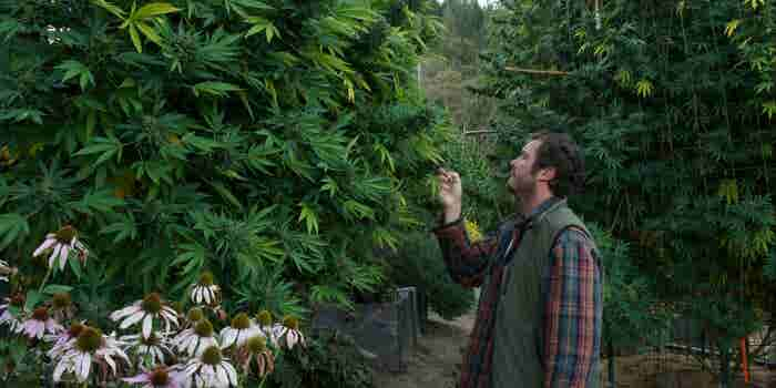The States Planning to Legalize Cannabis Should Avoid These 7 Big Mistakes