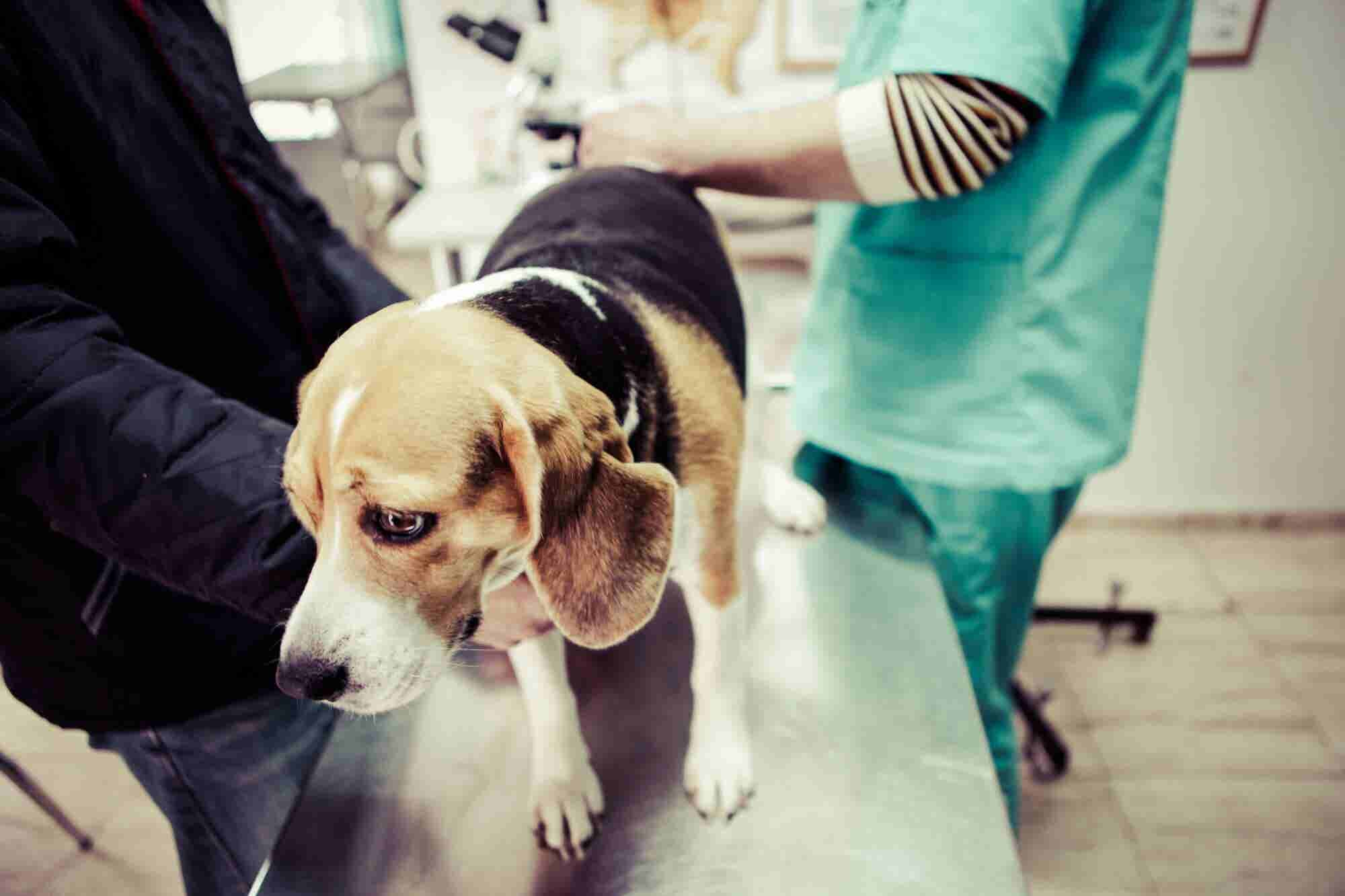Why Is Your Veterinarian Still Reluctant to Discuss CBD With You?