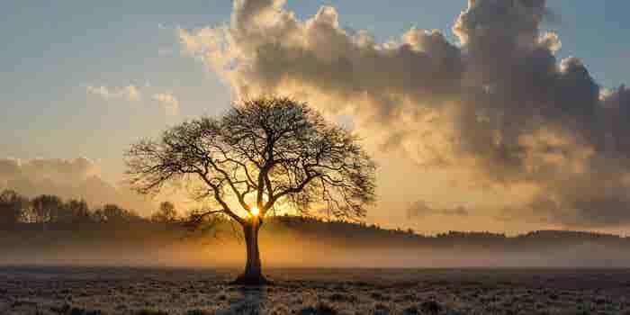 The Greatest Life Hack the Oak Tree Teaches