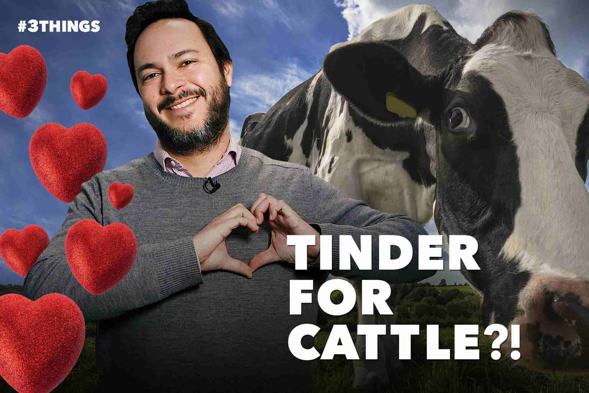 There's a New Version of Tinder Made Just for Cattle (60-Second Video)