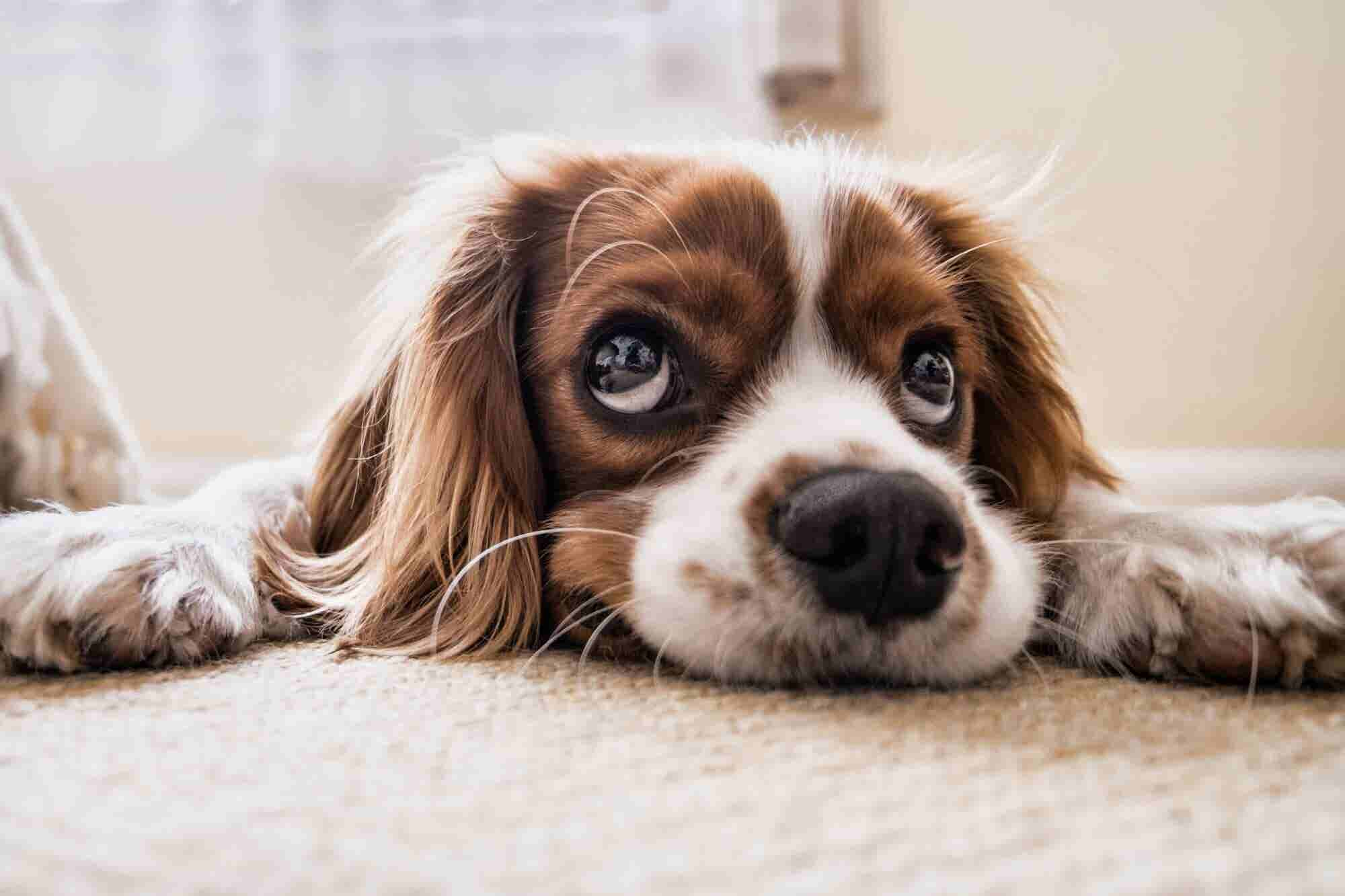 Pet Food Industry Witnesses a Gradual Development with Changing Trends
