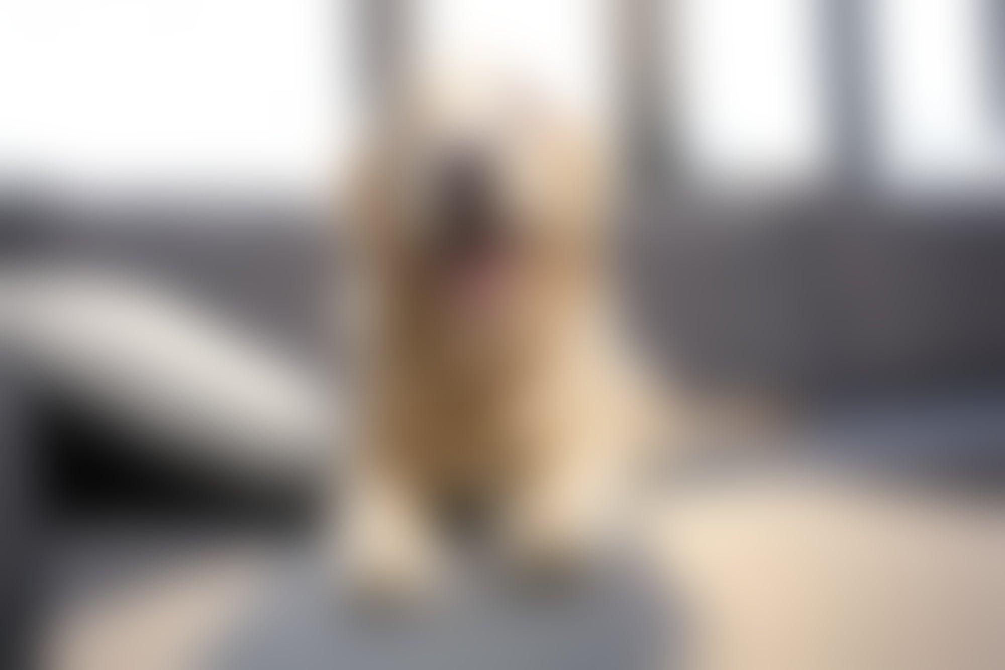 DogHero levanta 7 millones de dólares en inversión