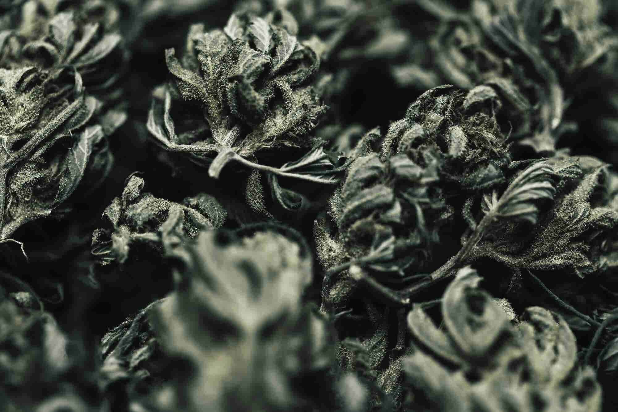 Can You Trust What's in Your Weed?