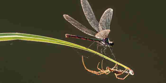 Insectoapocalipsis: ¿Qué pasaría en el mundo si desaparecen los insectos?