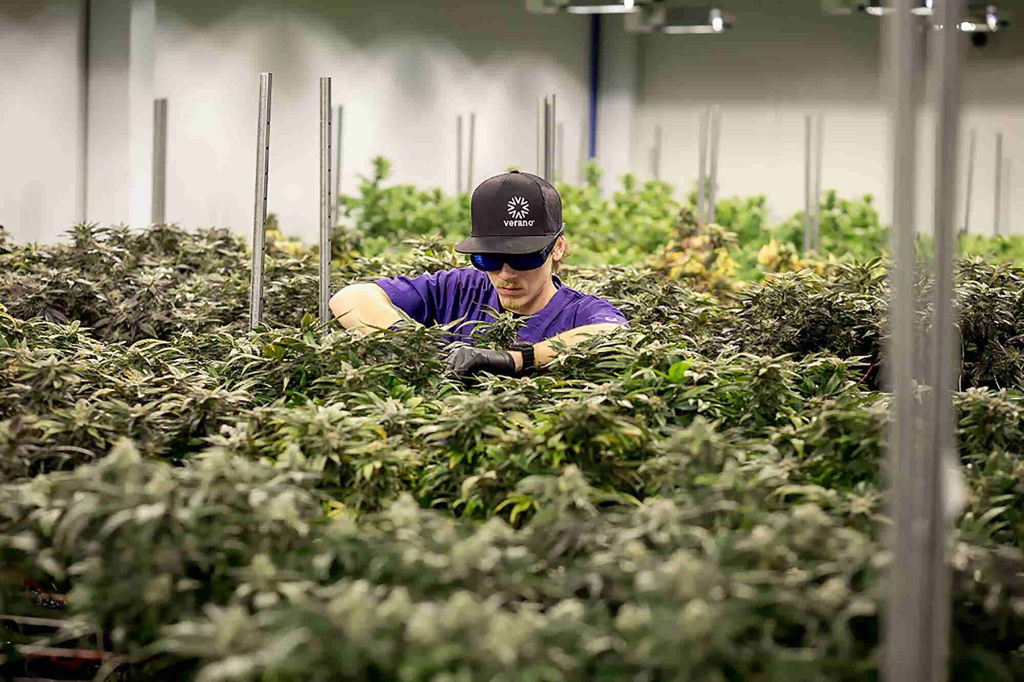 Harvest Buys Verano to Solidify Market Position Post-Prohibition (When...