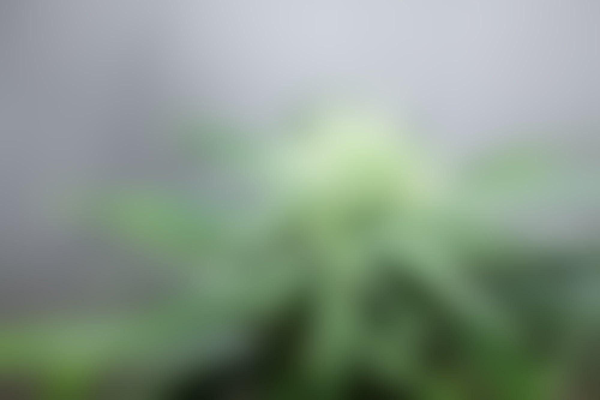 Investigar: lo que (por el momento) puedes hacer si quieres abrir un negocio de cannabis ahora que la Cofepris revocó los permisos