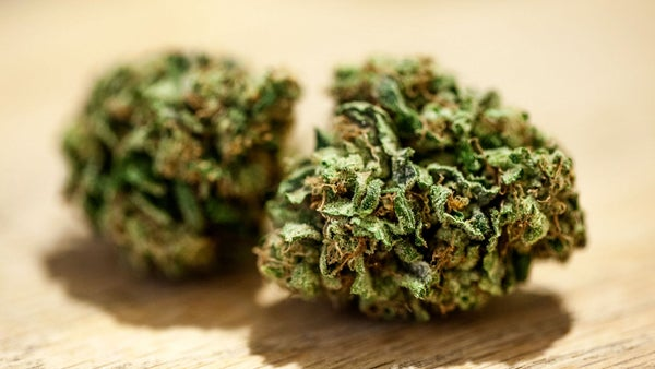Hemp vs Marijuana: The Difference
