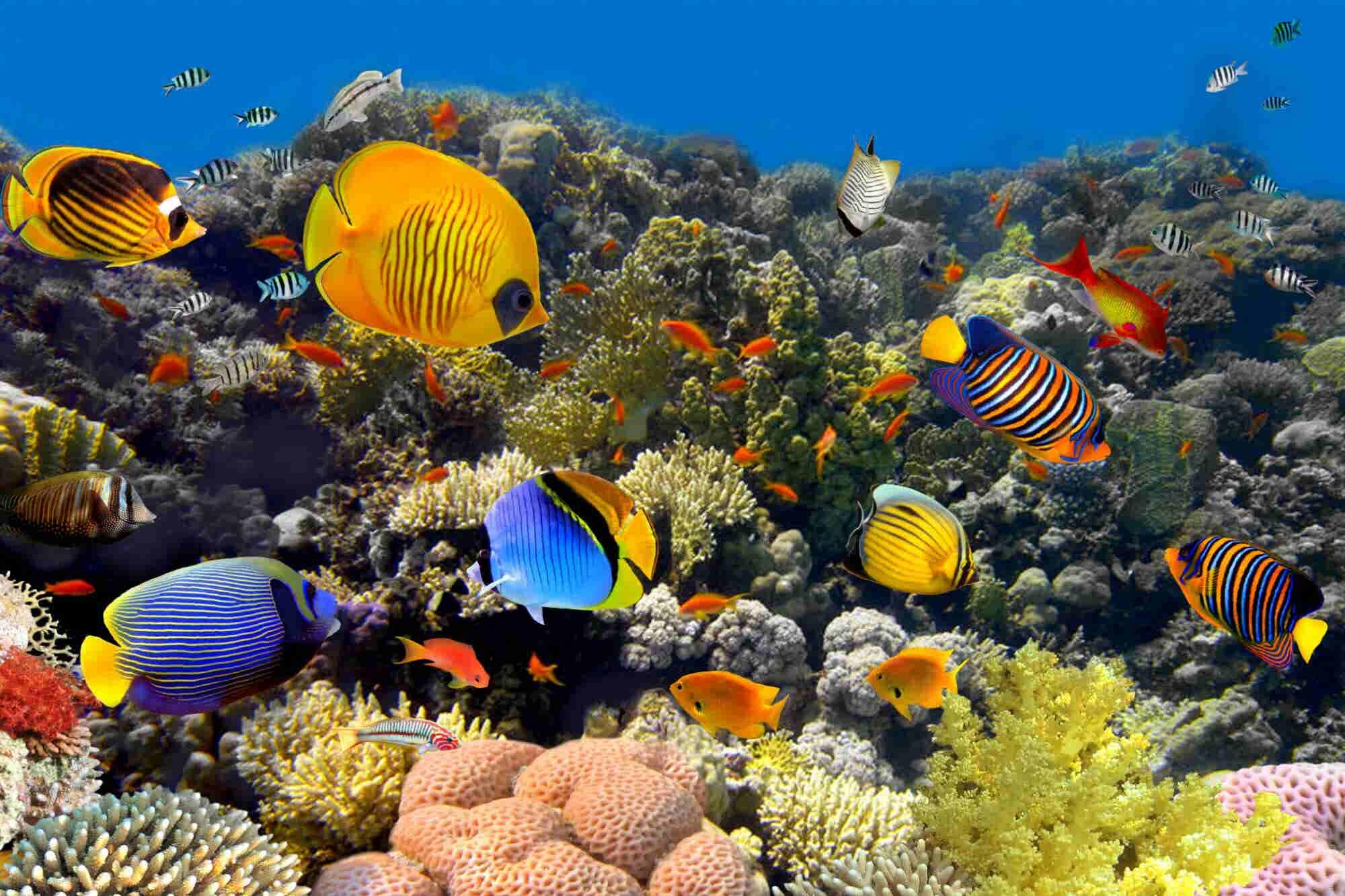 El turismo está dañando el océano. Así puedes protegerlo
