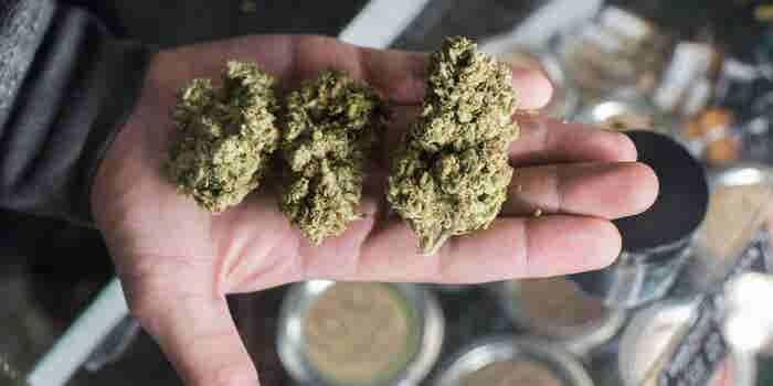 Aandacht besteden aan deze 6 Trends in de cannabisindustrie