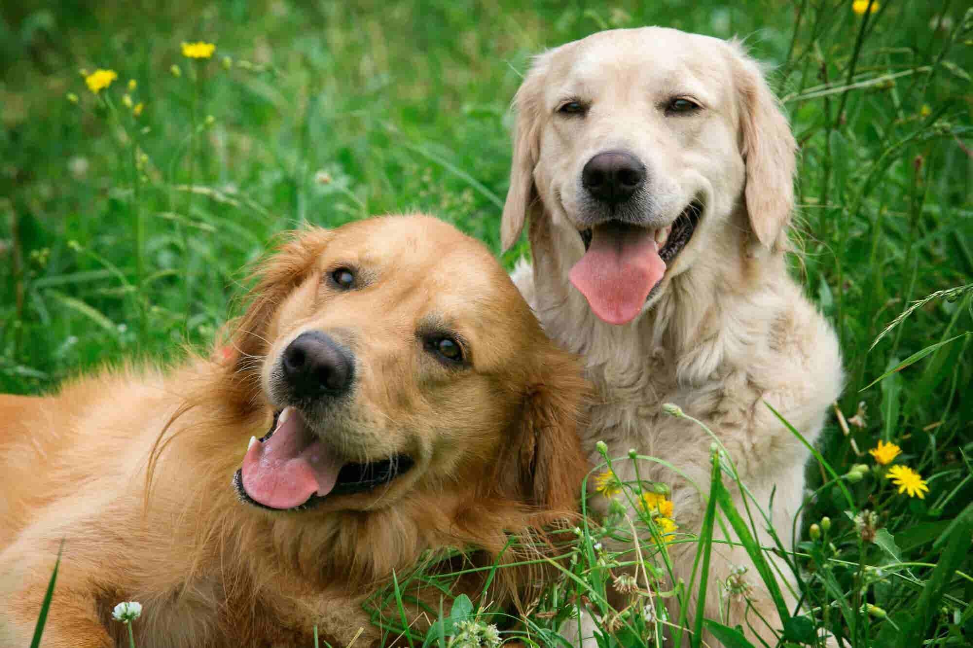 La startup de mascotas, DogHero, recibe 7 mdd de inversión y se consolida en México
