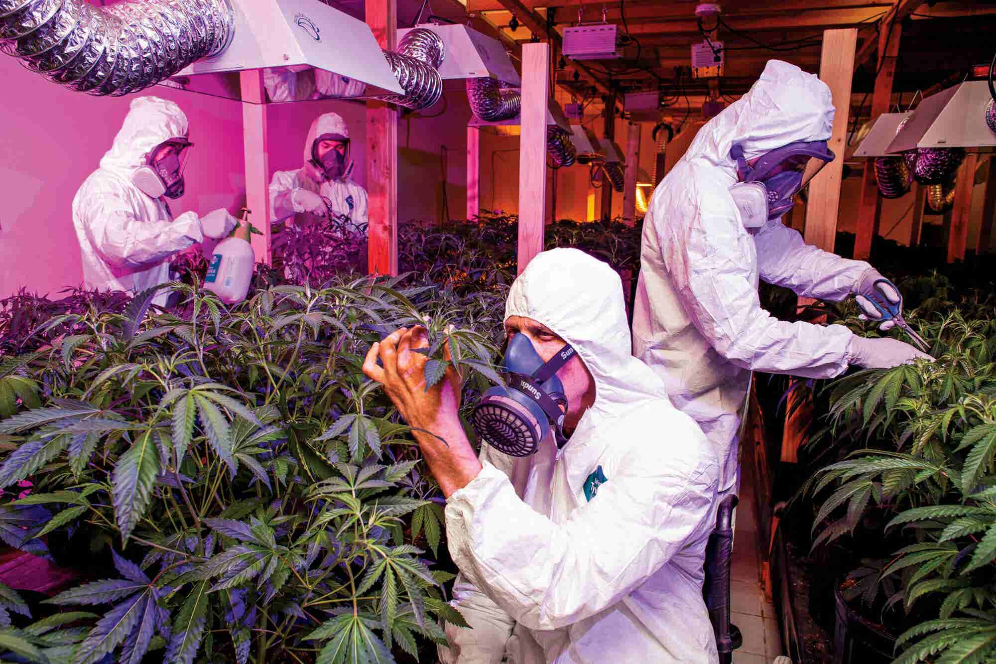 Whatever Business You're In, You Can Pivot to the Cannabis Business