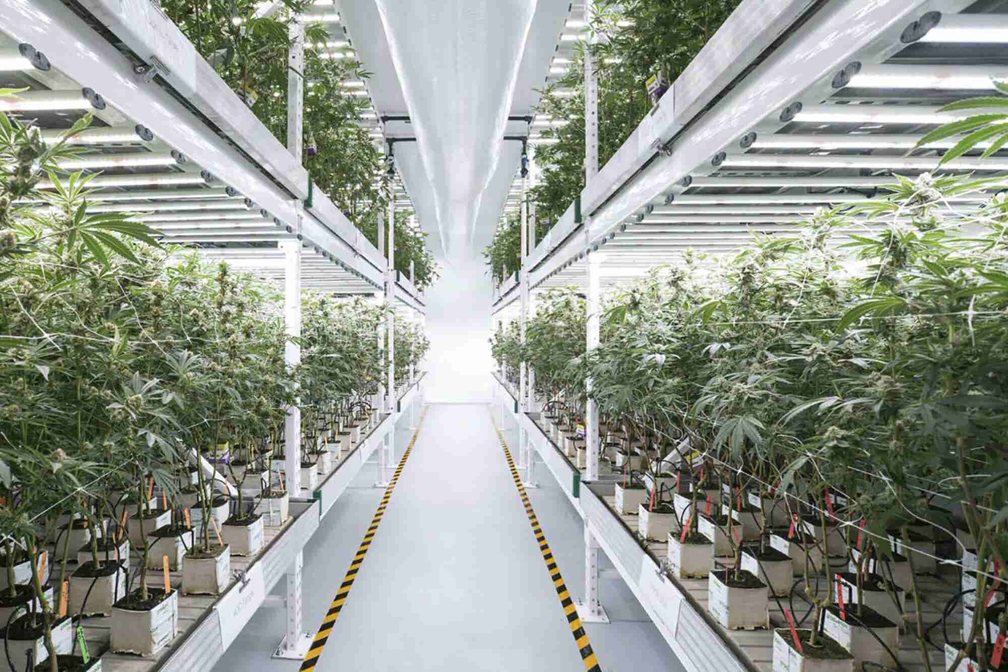 How the Green Rush Is Accelerating the Revolution In Smart Farming Technologies