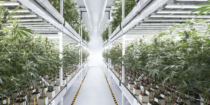 How the Green Rush Is Accelerating the Revolution In Smart Farming
