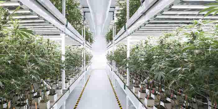 Hoe de Green Rush de revolutie versnelt in Smart Farming Technologies