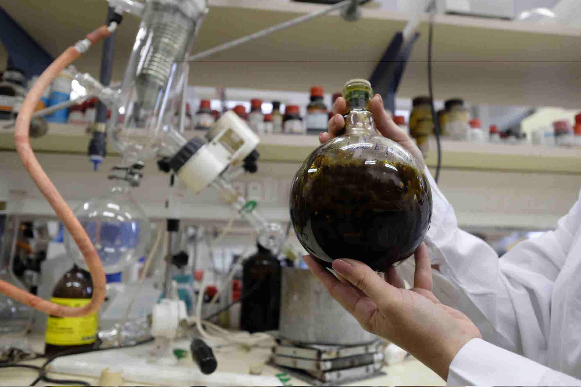 How Israel Became the Global Leader in Cannabis Research