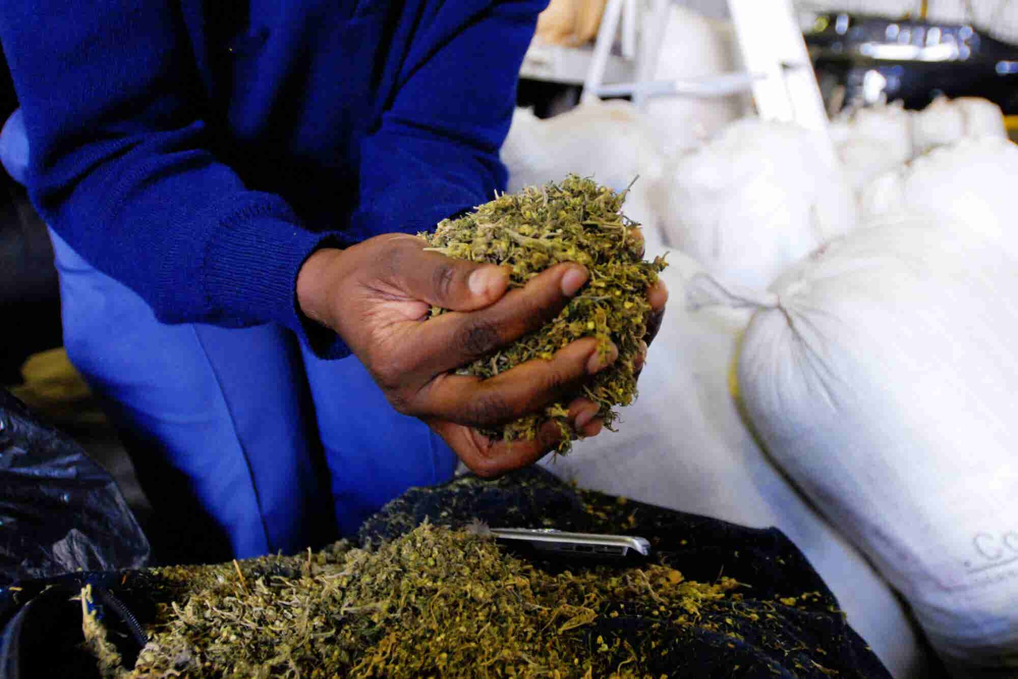 The African Cannabis Market Could Reach $7.1B by 2023