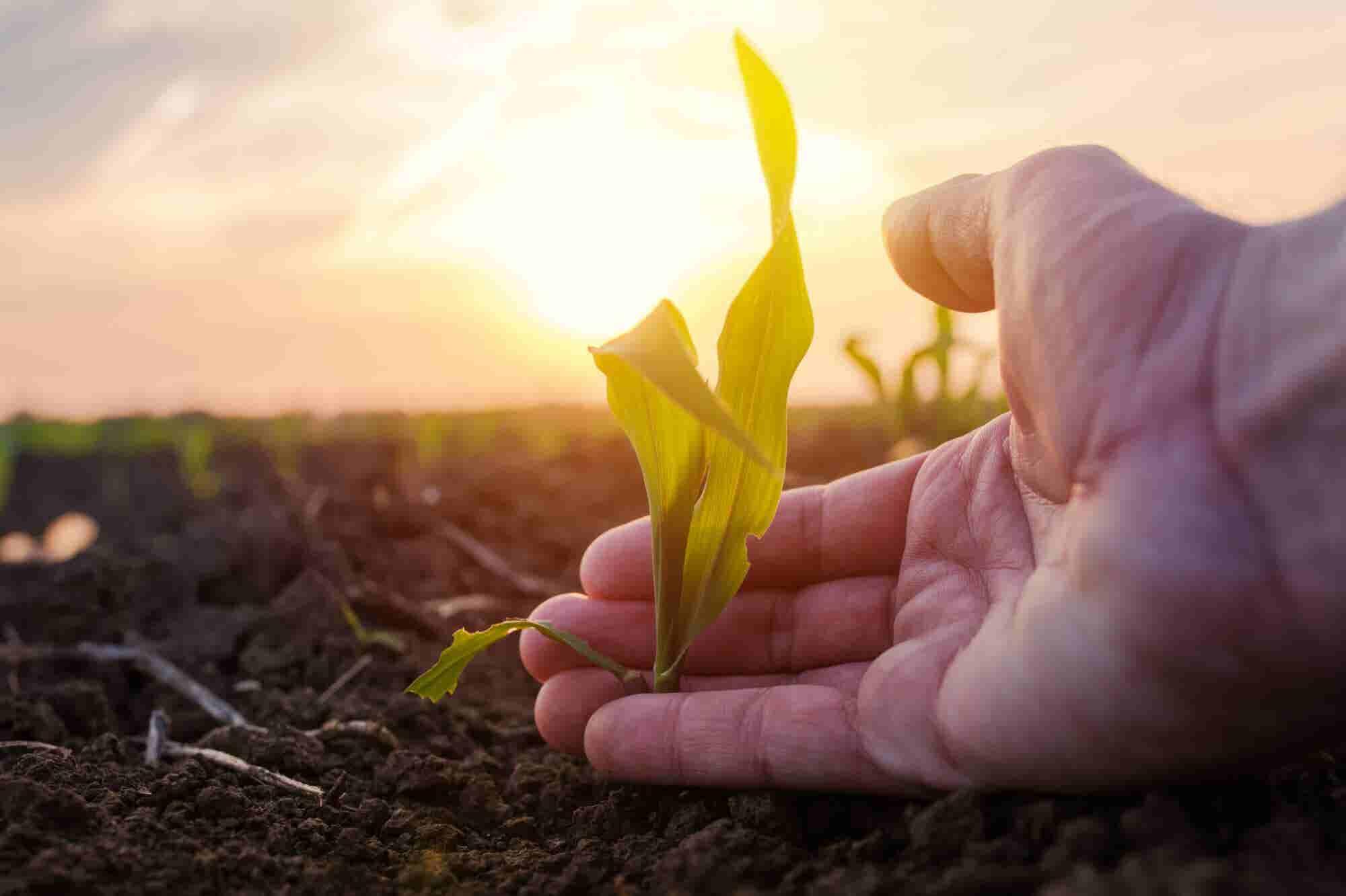 More Than Ever Entrepreneurs Must Maximize Human Flourishing