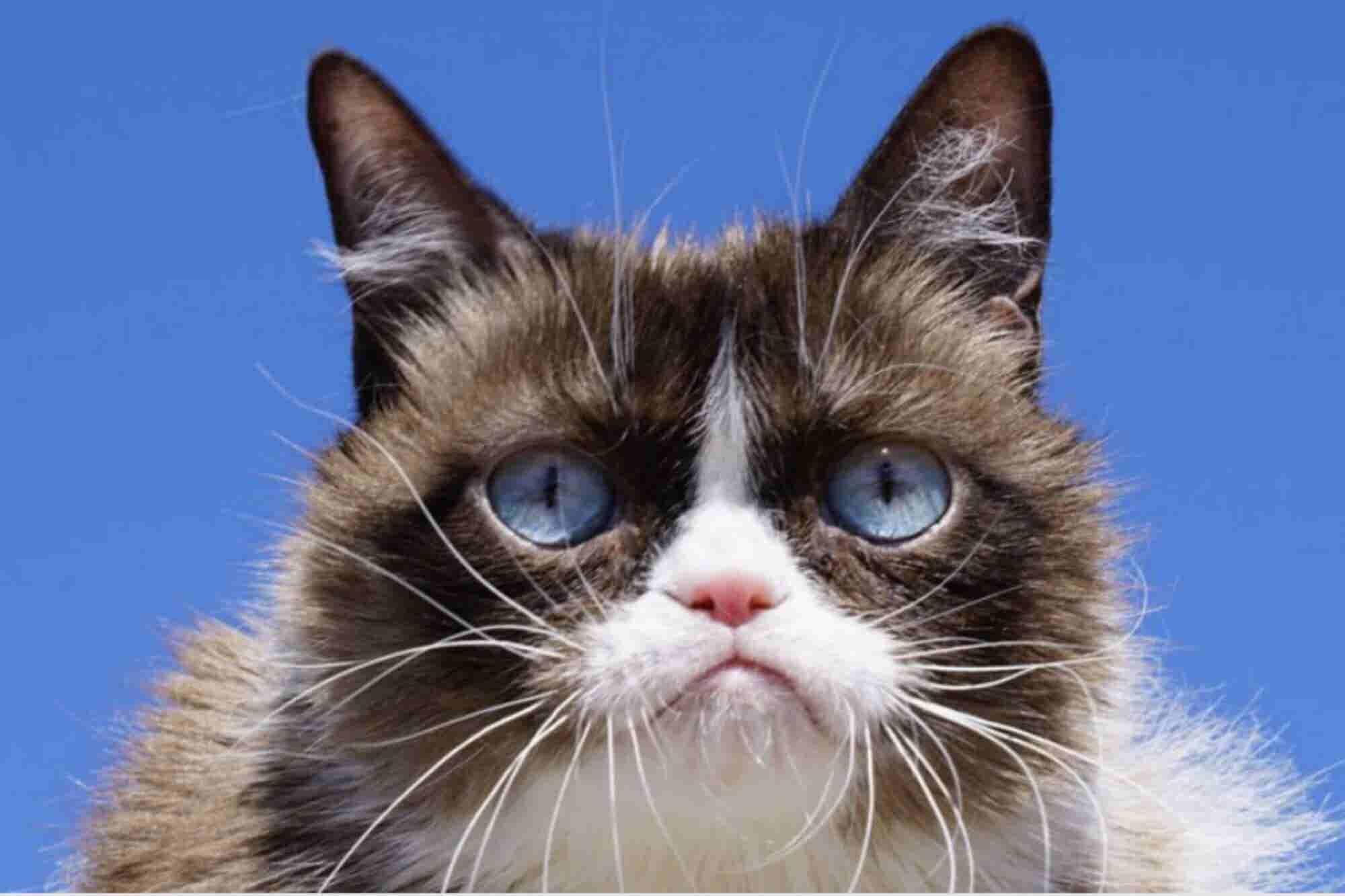 Fallece Grumpy Cat, el gato que se hizo mundialmente famoso por estar enojado