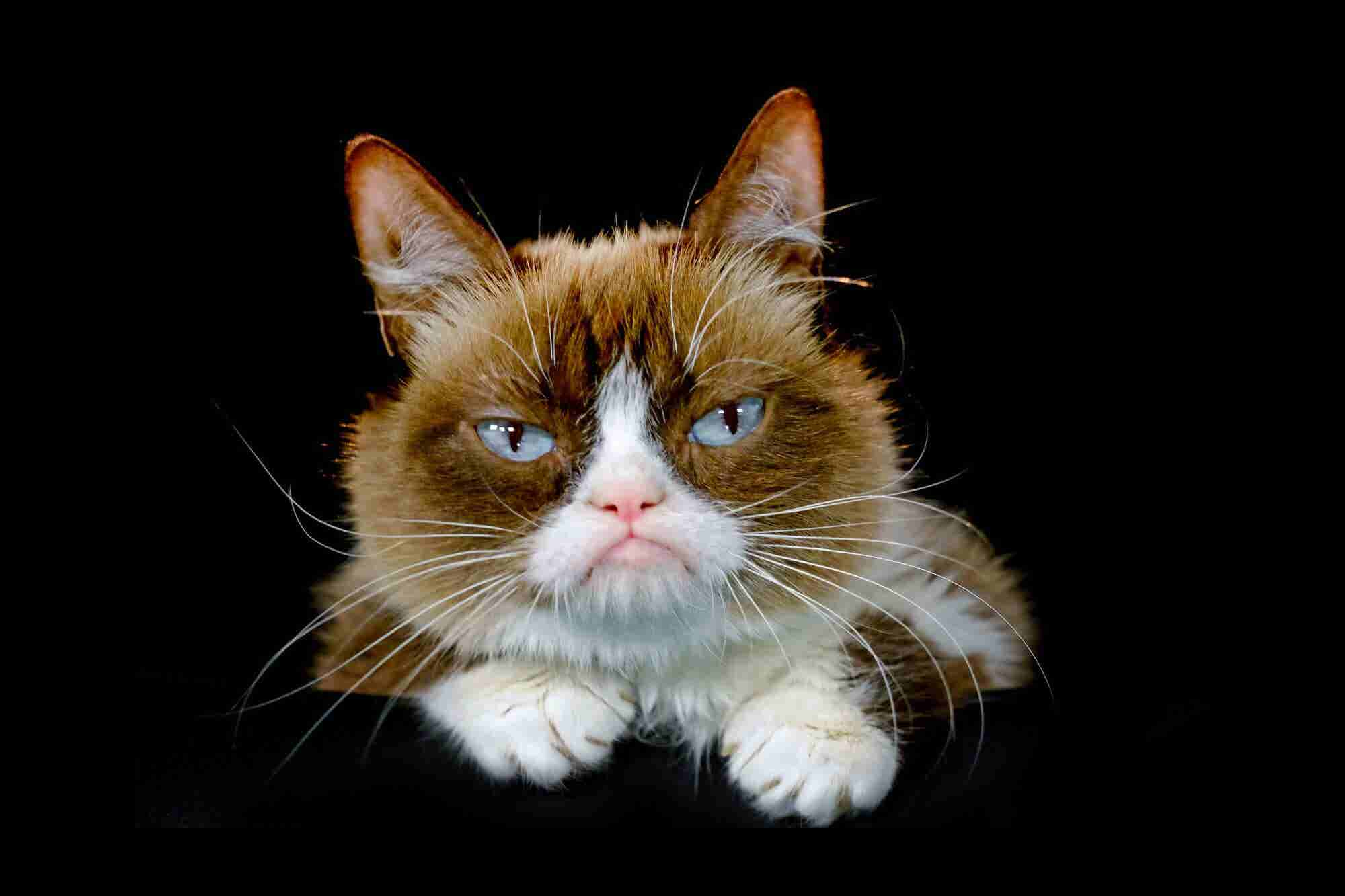 Internet Sensation Grumpy Cat -- Source of Multimillion-Dollar Empire -- Dies at Age 7
