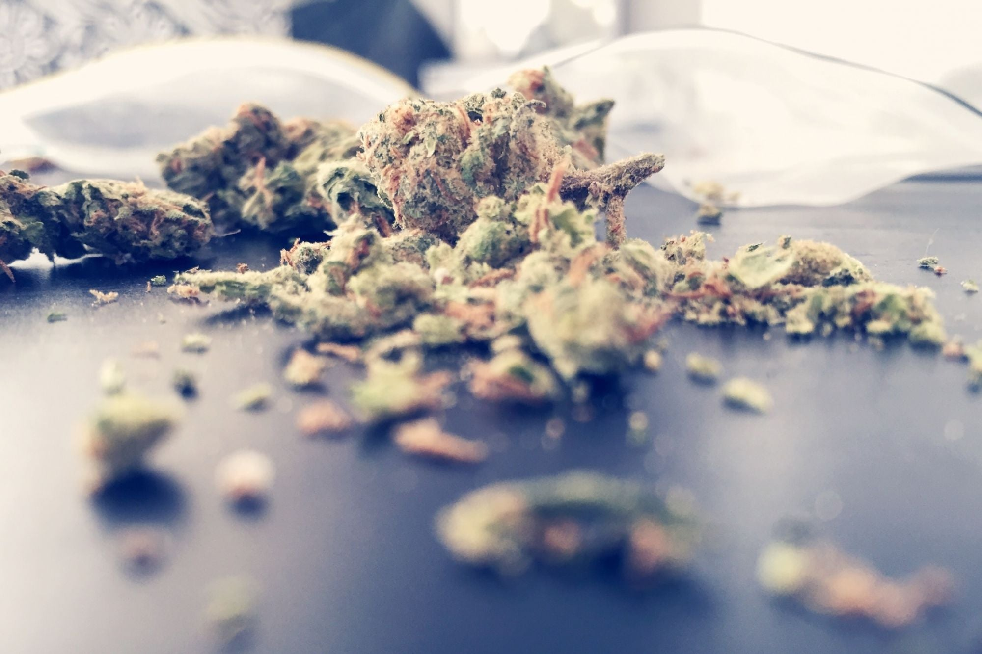 Compliance Is Cost Effective: 3 Common Ways Cannabis Operators Get in Trouble