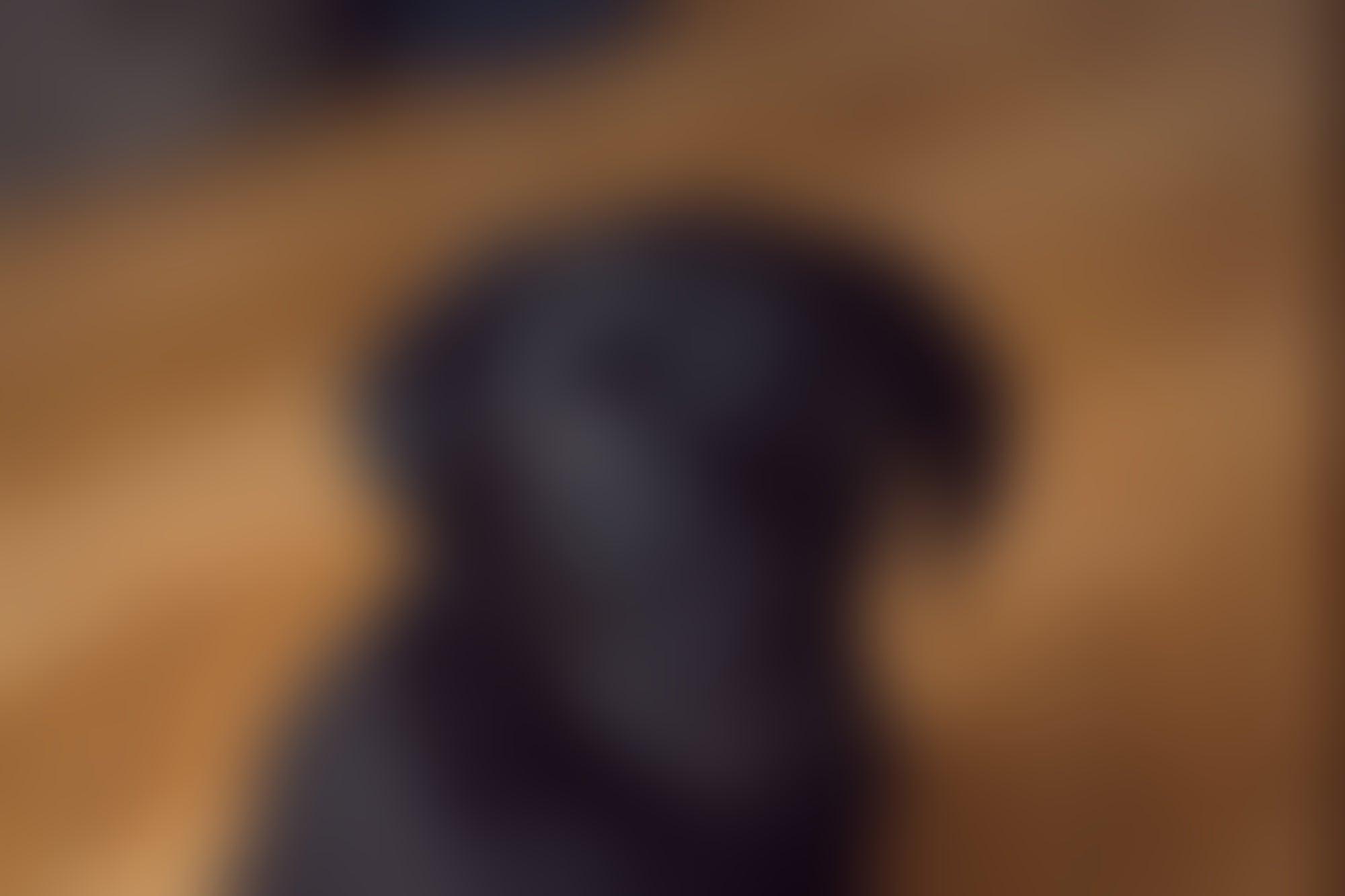 Un estudio revela que el aceite de cannabidiol ayuda a los perros que sufren ataques