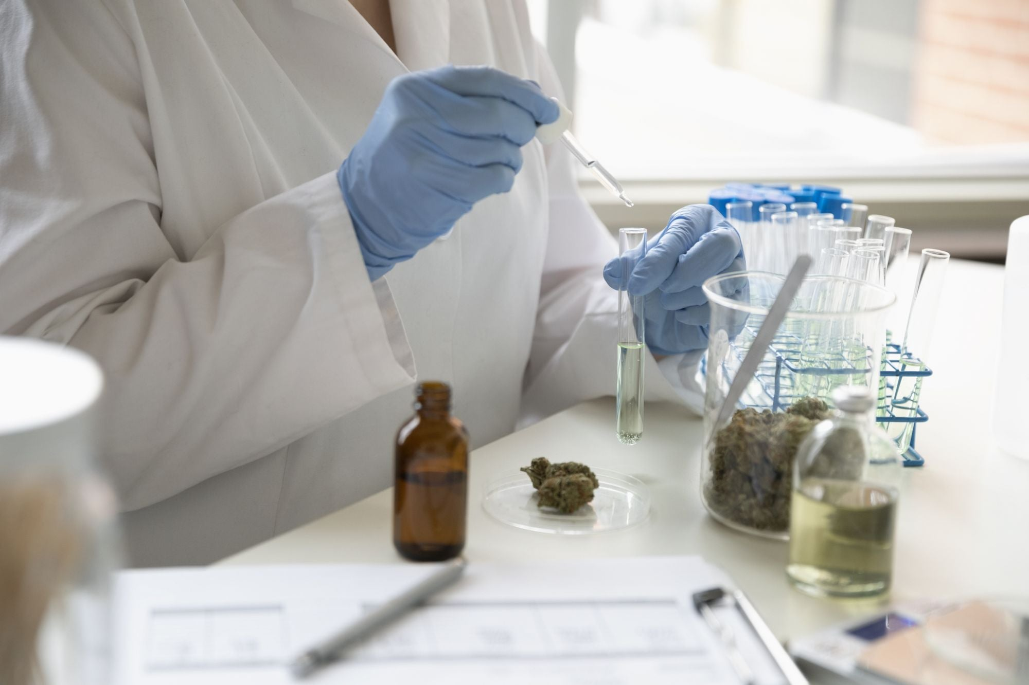 Keeping Cannabis Safe: A Call for Standardization